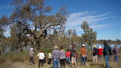 Naturally Loddon - Wetlands Guided Tour