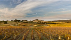 VVThumbnail__9133623_BL54_panoramic_vineyard_HIGH_RES.jpg