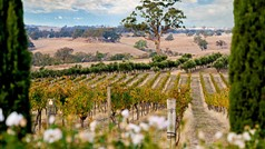 Redesdale Estate Vineyard