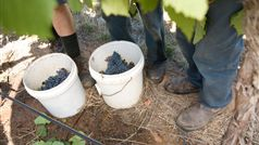 Hands on Harvest - As Part of High Country Harvest 2015