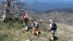 Hiking in the Alpine National Park