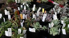 Friends Super Spring Plant Sale