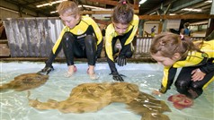 Children playing with our Eastern Fiddler Rays