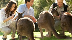 Get a Magic Moment feeding Kangaroos at Healesville Sanctuary
