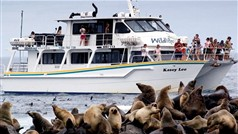 Seal Watching Cruise - Wildlife Coast Cruises