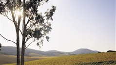 Yarra Valley Winery Tours