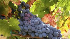 Wine & Food Lovers' Tours