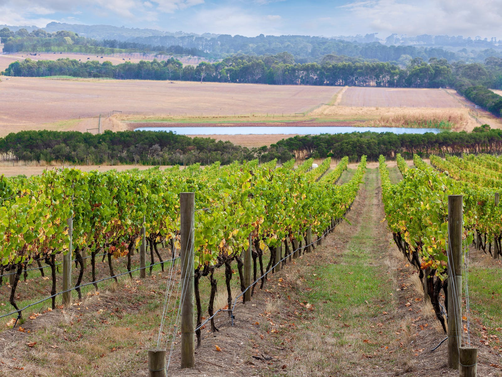Mornington Peninsula Wine Tour