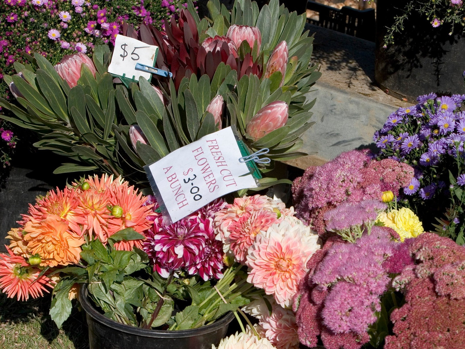 Flowers at Drouin Craft & Produce Market