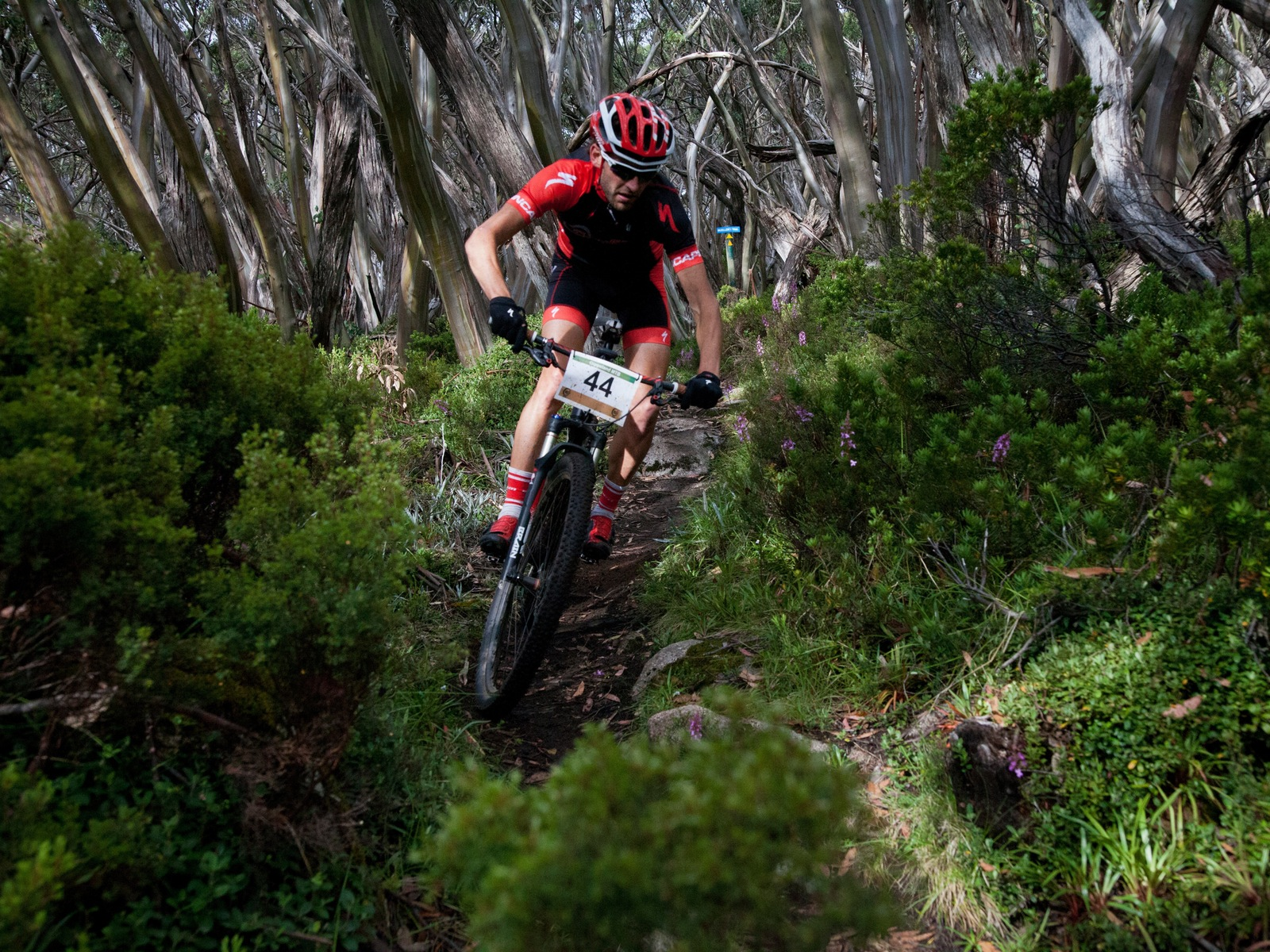 Mount Baw Baw Mountain Biking