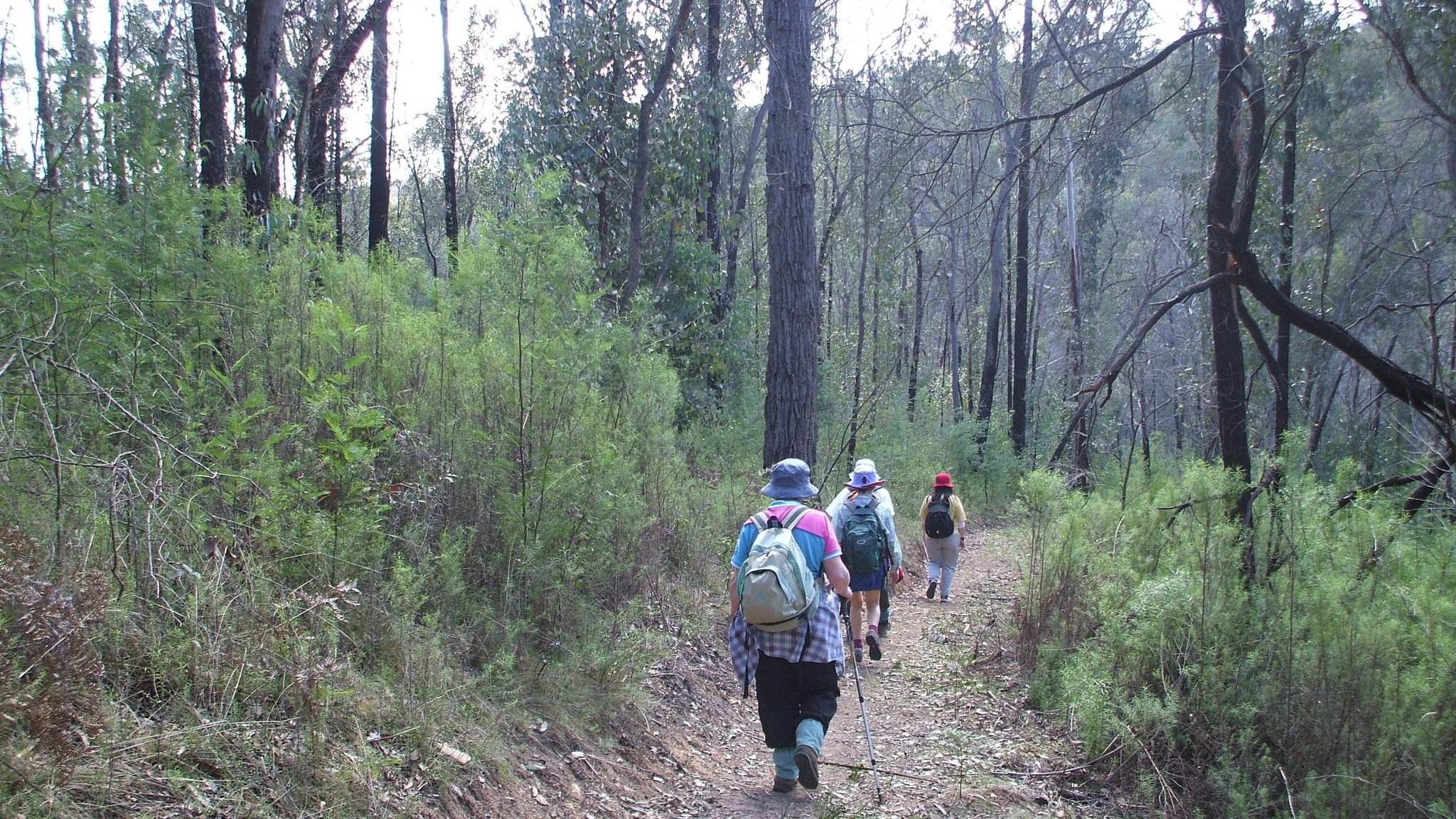 Walking ecotours in East Gippsland