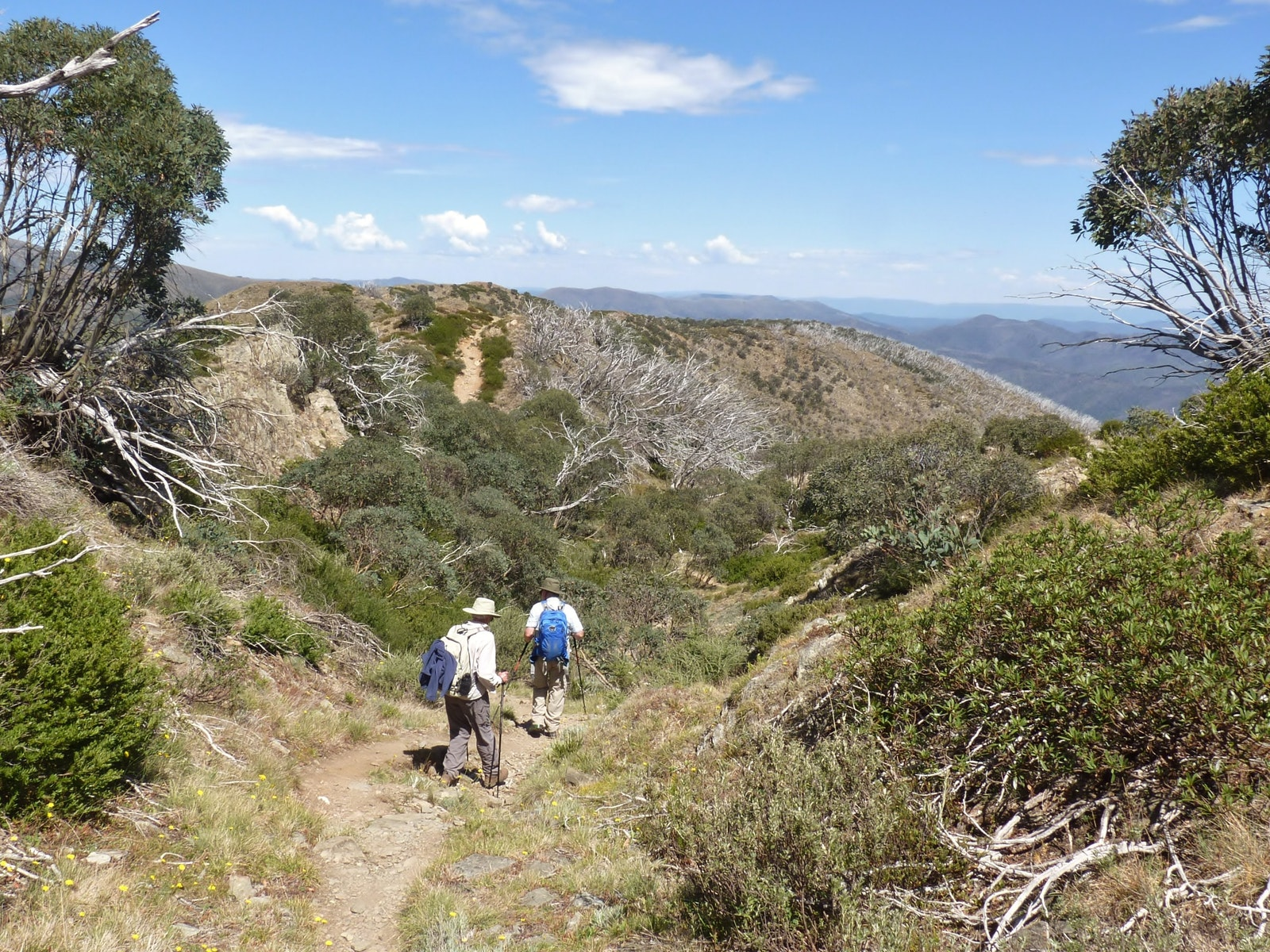 Walking Track to Mt Feathertop with two walkers