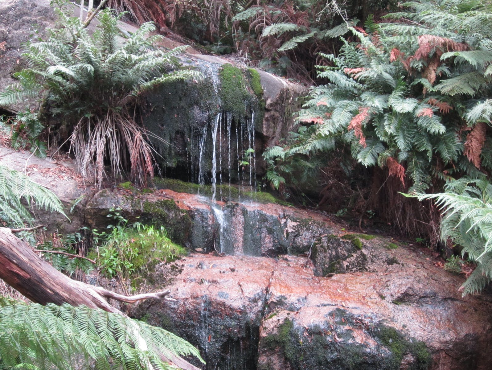 Ferns waterfall, Mount Buangor State Park - GRAMPIANS