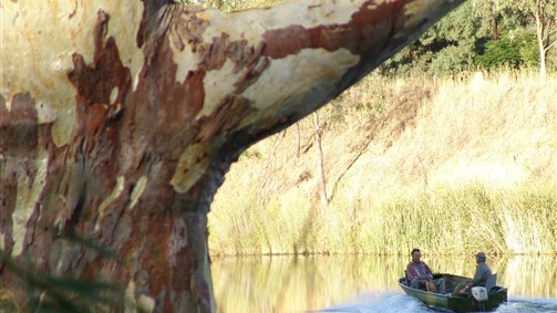 Many great fishing locations along the Loddon River in this region