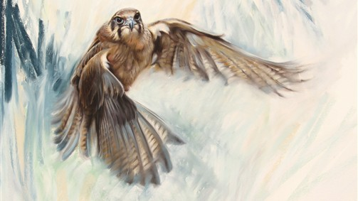 'The power of flight-brown falcon'