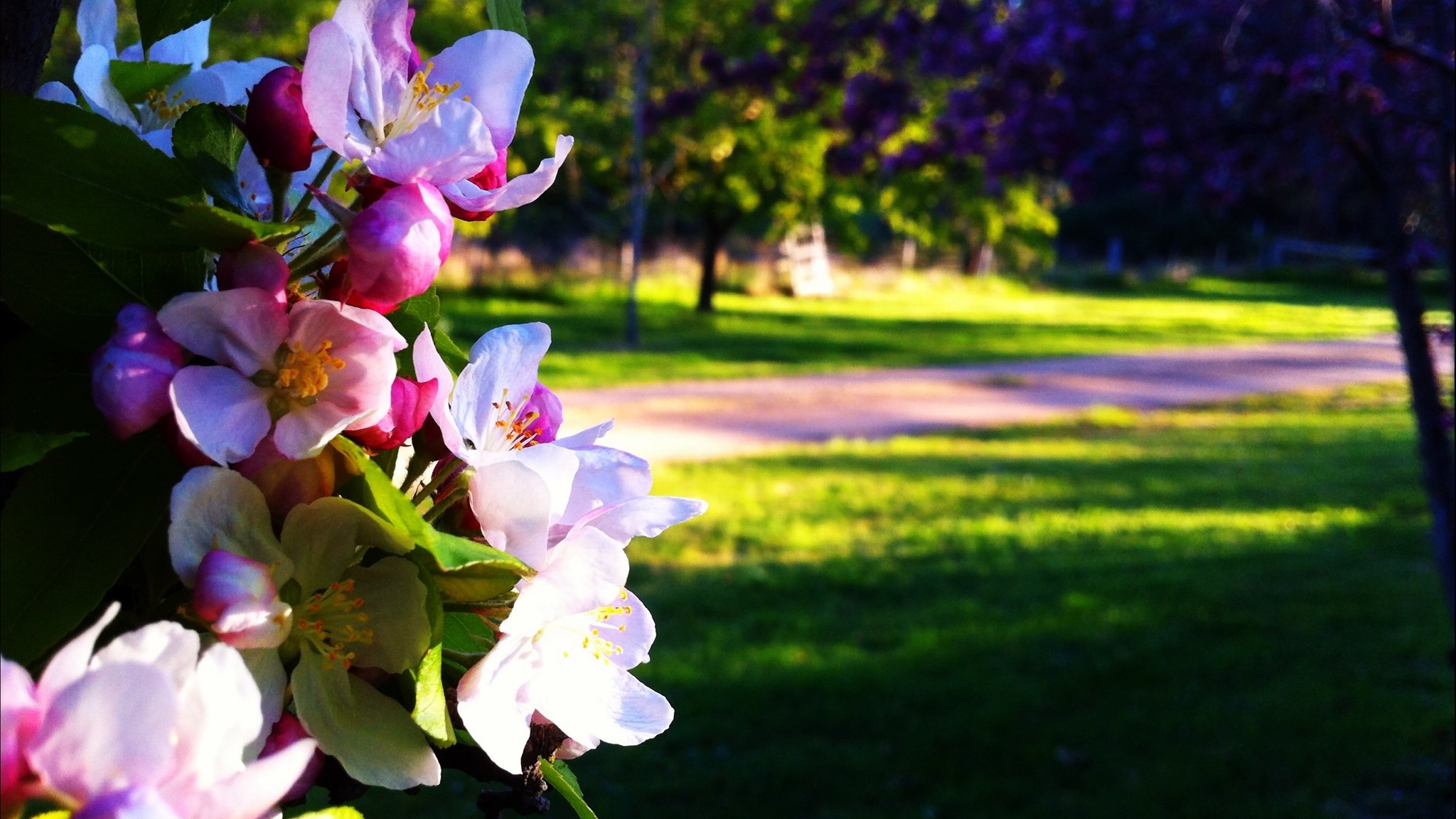 "alt=""fresh spring blossom in the foreground with green lawns in the background"""