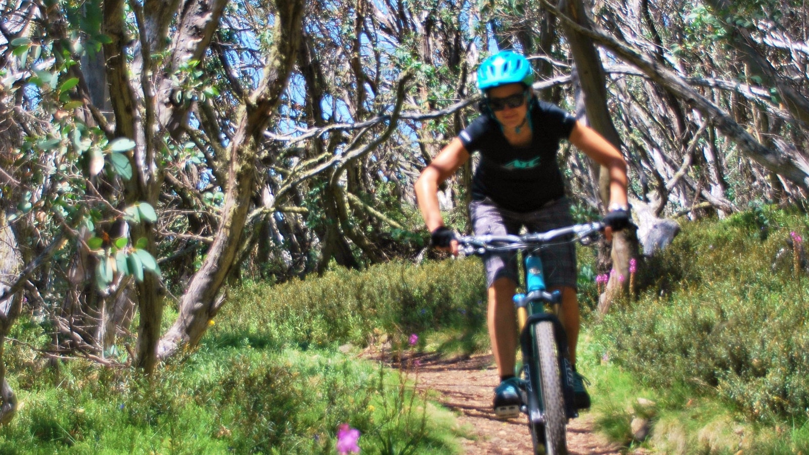All Terrain Cycle Tours - Mt Buller