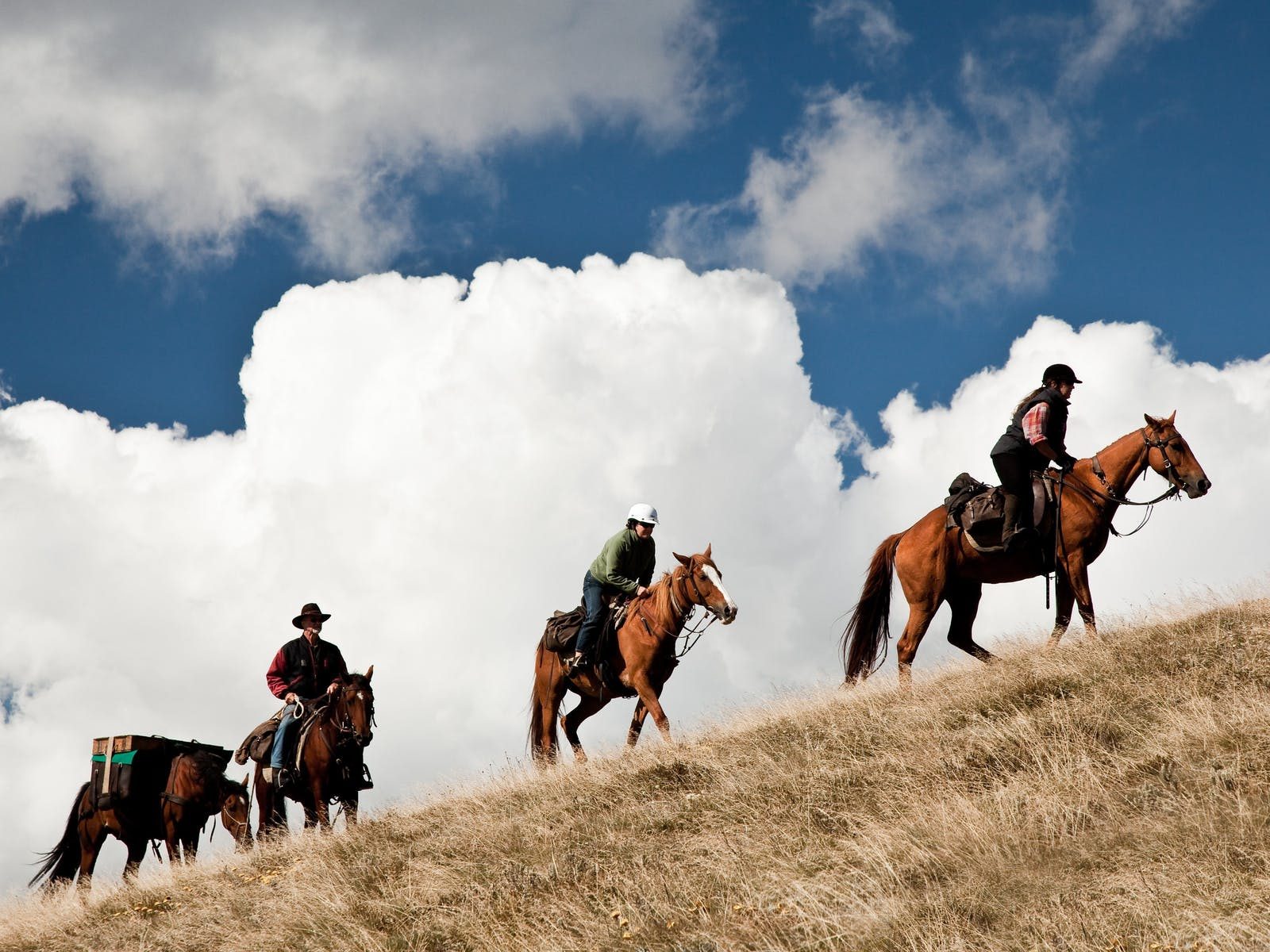 Pack Horses cross the plains