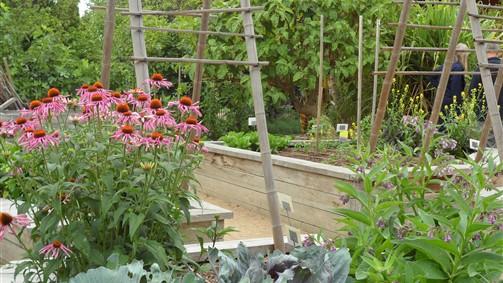 Vegetable garden planner victoria australia for Garden planner australia
