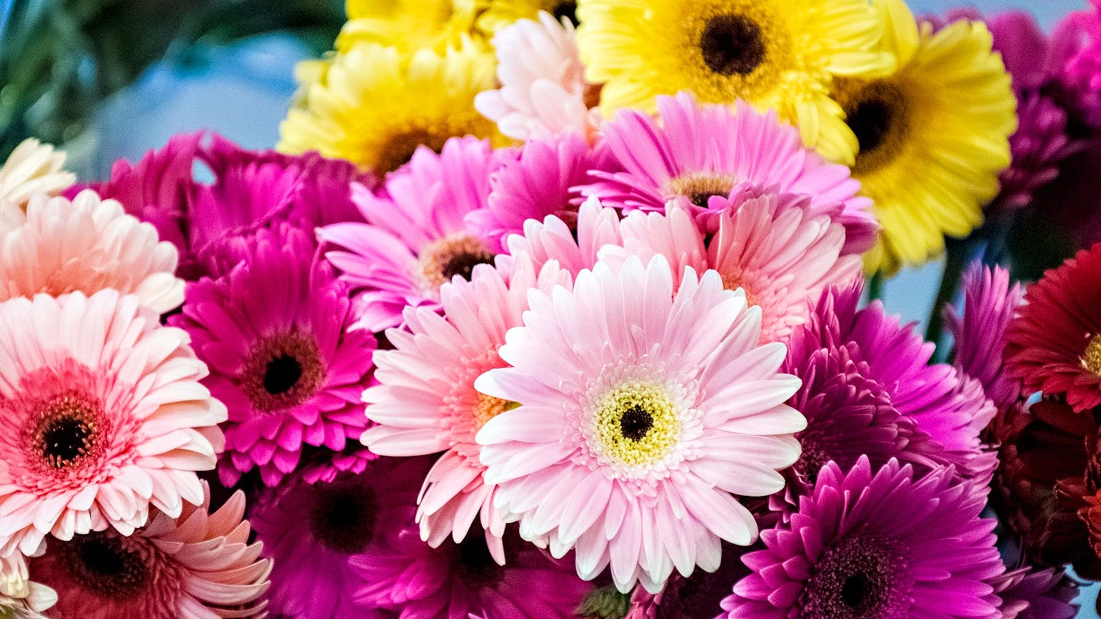Colourful gerberas from Kirpy's Flowers