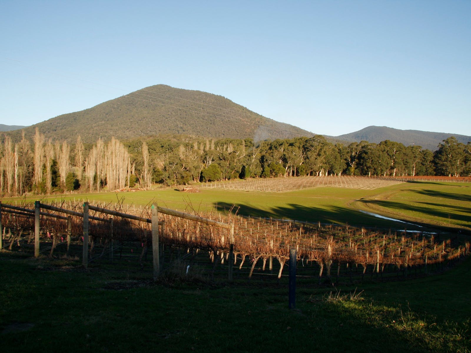 Yarra Valley Vineyards with Oceania Tours