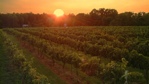 GTOLandscape__9014806_AR07_vineyard_sunset.jpg