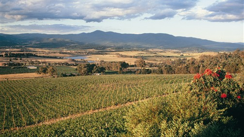 Yarra Valley Wine Region
