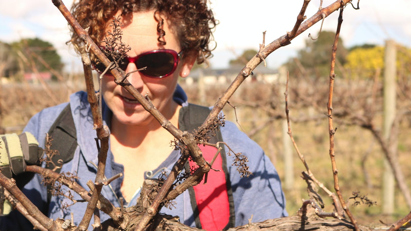 Vine maintenance and pruning