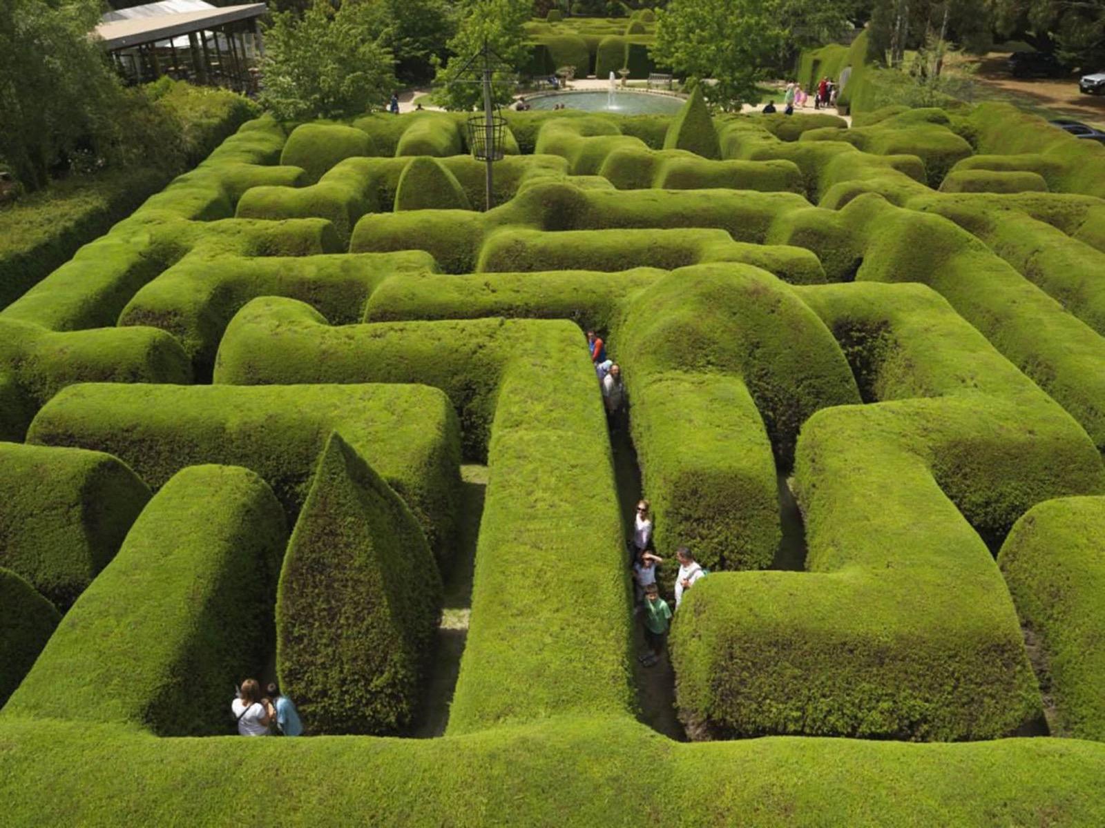 Family activities mornington peninsula victoria australia ashcombe maze lavender gardens negle Choice Image