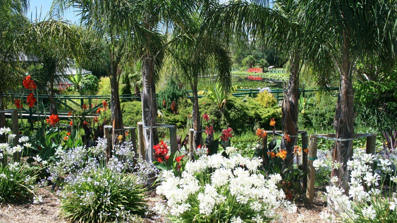 Lotus flower season event yarra valley dandenong for Garden design yarra valley