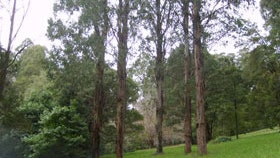 Forest in the Yarra Ranges