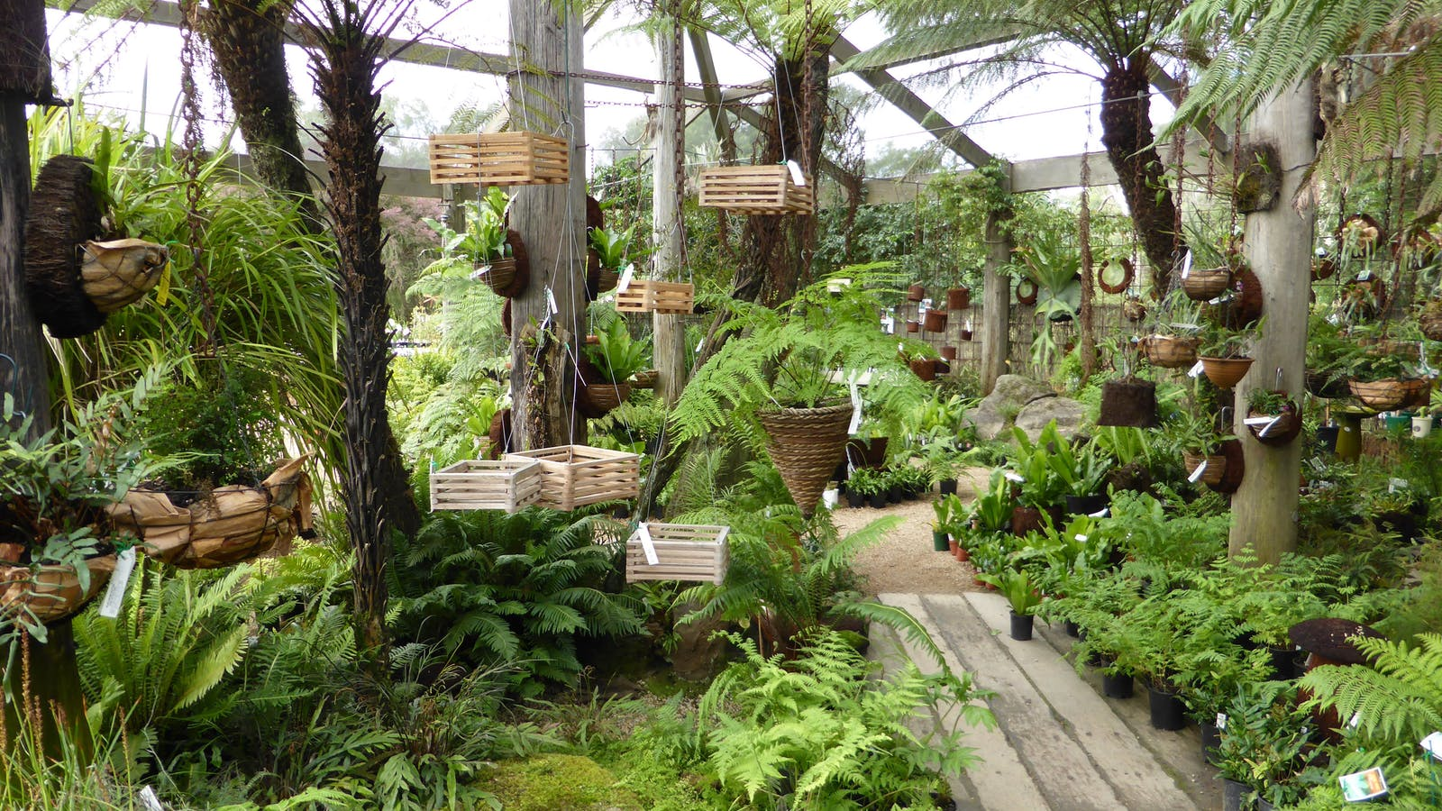 lush, cool fernery