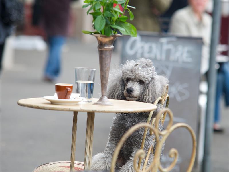 Your dog's happy space, Your happy space, Victoria, Australia