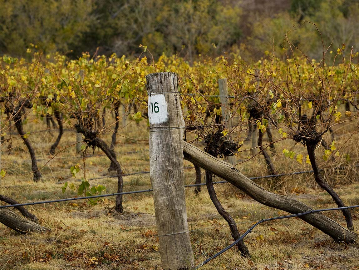 Craiglee Vineyard, Sunbury, Daylesford and the Macedon Ranges, Victoria, Australia