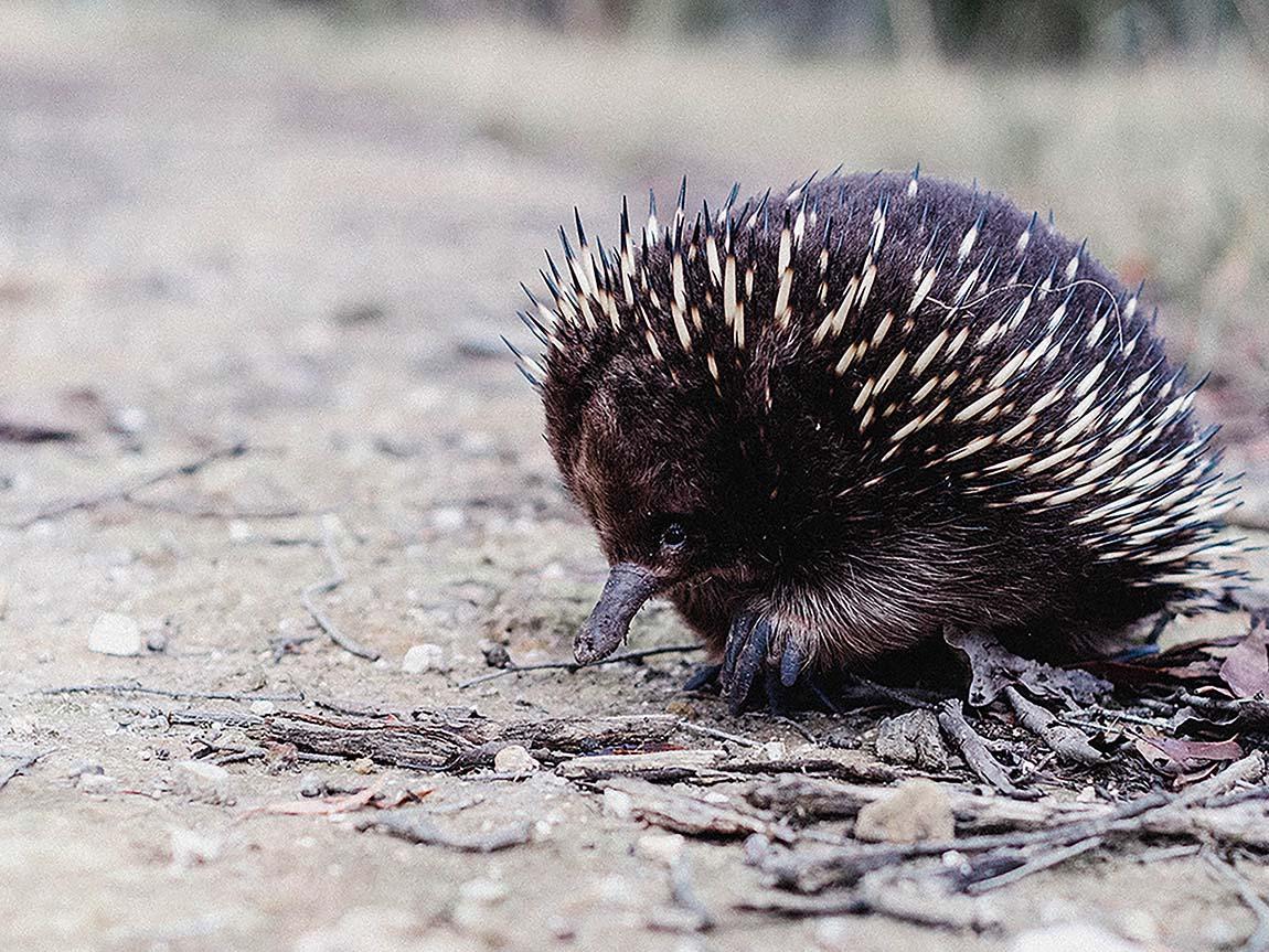 Wildlife and zoos, Nature and wildlife, Victoria, Australia