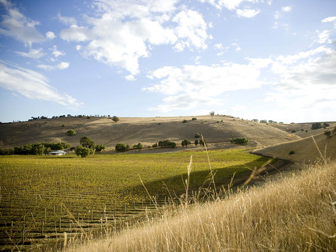 Clyde Park Vineyard, Geelong & the Bellarine, Victoria, Australa