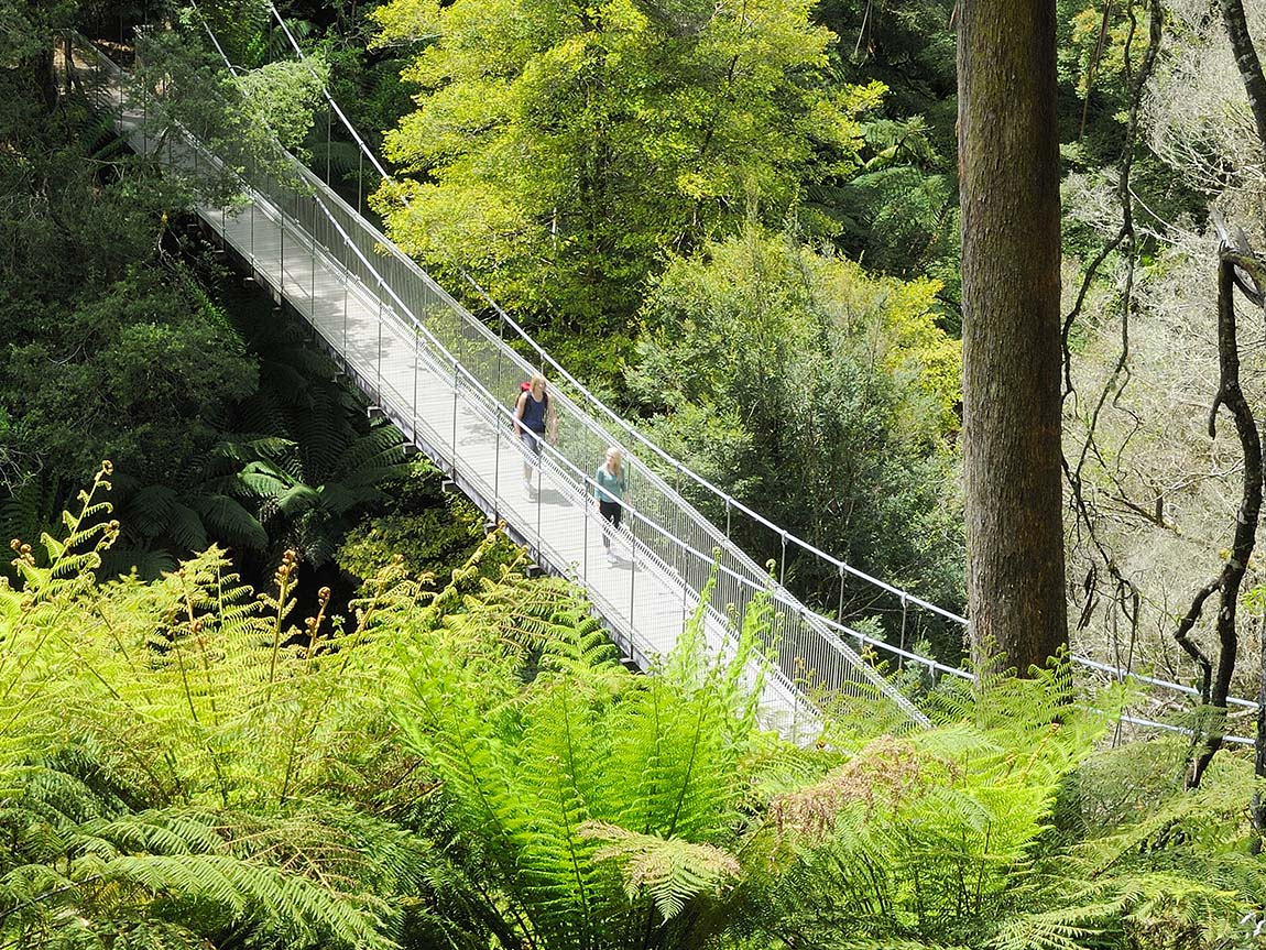 Hiking at Tarra Bulga National Park, Gippsland, Victoria, Australia