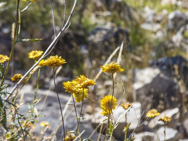 Wildflowers Nature And Wildlife Victoria Australia