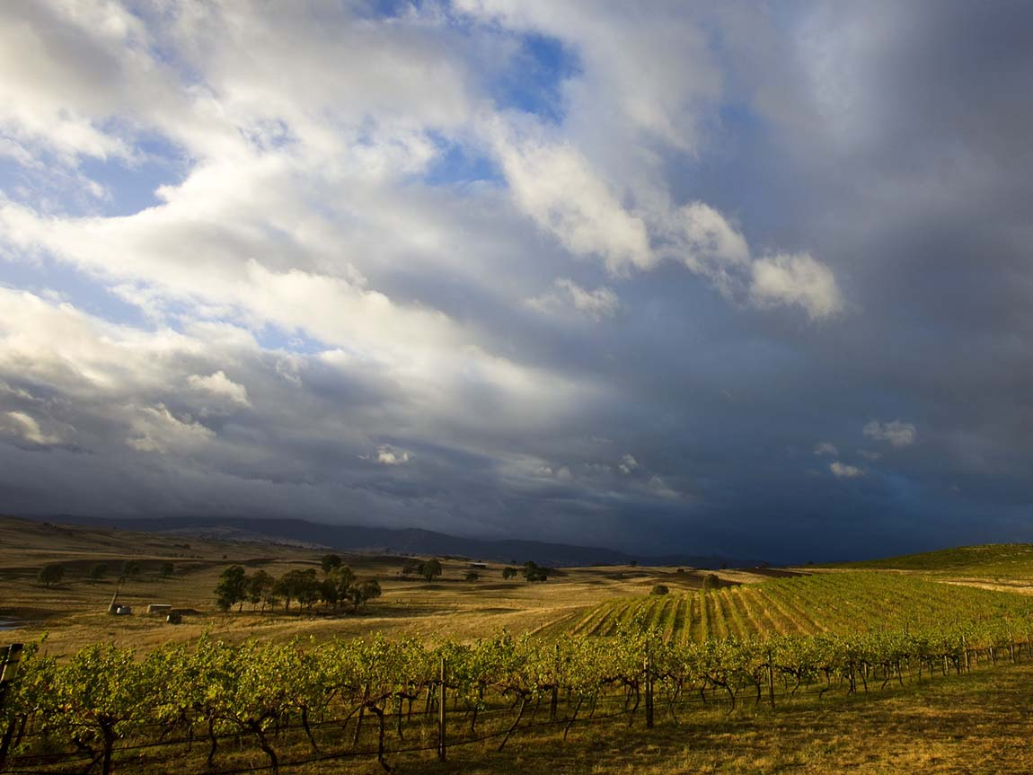 Delatite Winery, Mansfield, High Country, Victoria, Australia