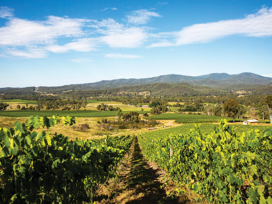 Pizzini Wines, King Valley, High Country, Victoria, Australia