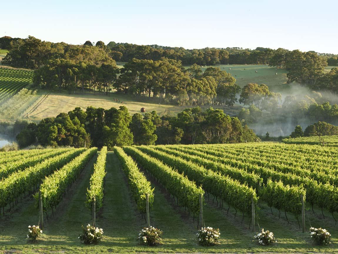 Wine Regions Around Melbourne Food And Wine Victoria