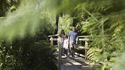 Beauty Spot Trail, Yarra Valley and Dandenong Ranges, Victoria, Australia