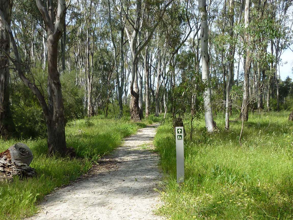Koondrook Red Gum Forest Walk, The Murray, Victoria, Australia