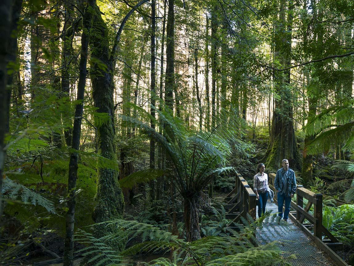 Dandenong ranges australia