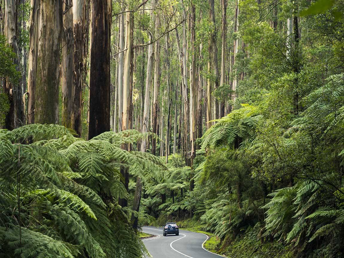 Driving the Balck Spur, Yarra Valley and Dandenong Ranges, Victoria, Australia